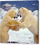 Polar Bear Dance Canvas Print