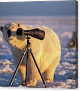 Polar Bear Investigating Photographers Canvas Print