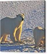 Polar Bear Mother And Cub On Ice Canvas Print