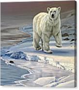 Polar Bear On Icy Shore    Canvas Print