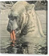 Polar Bear Snacking Canvas Print