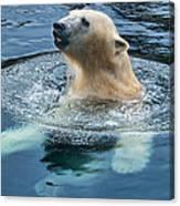 Polar Bear Swim In Cold Water Canvas Print