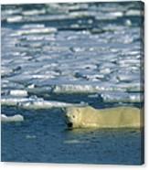 Polar Bear Wading Along Ice Floe Canvas Print