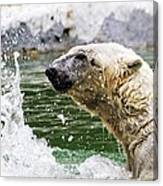 Polar Splash Canvas Print