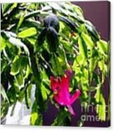 Polka Dot Easter Cactus Canvas Print