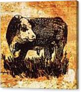 Polled Herford Bull 22 Canvas Print