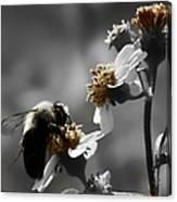 Pollination  Canvas Print