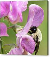 Pollination Nation X Canvas Print