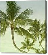 Polynesia Palm Trees Canvas Print