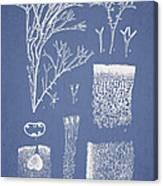 Polyopes Polyideoides Okamura Canvas Print