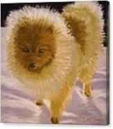 Pom Pom Pup Canvas Print