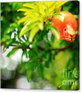 Pomegranate On A Tree Canvas Print