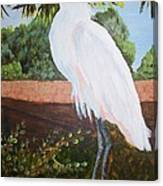 Ponce Point Egret Canvas Print