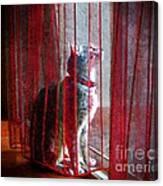Poncho Watching It Rain Canvas Print