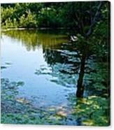 Pond 3 Canvas Print