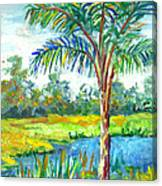 Pond And Palm Canvas Print