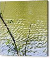 Pond At Norfolk Botanical Garden 8 Canvas Print