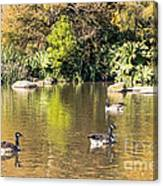 Pond Geese Canvas Print