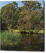 Pond In Park Canvas Print