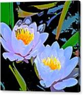 Pond Lily 17 Canvas Print