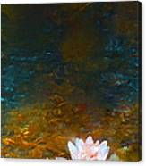 Pond Lily 27 Canvas Print