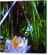 Pond Lily 28 Canvas Print