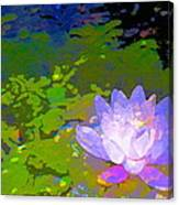 Pond Lily 29 Canvas Print