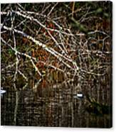 Pond Of Reflection Canvas Print