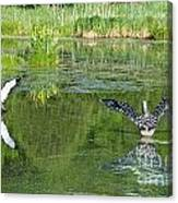 Pond Pairs Dancing Canvas Print