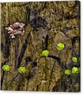 Pond Scene Canvas Print