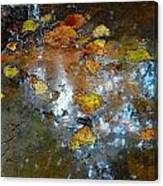 Pond Scum Canvas Print