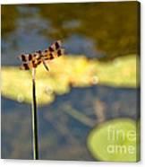 Pond Visitor Canvas Print