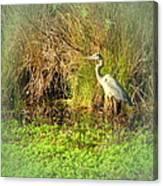 Pond Wildlife Canvas Print