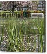 Pond With Reed Canvas Print