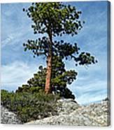 Ponderosa Pine And Granite Boulders Canvas Print