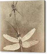 Pondhawk Dragonfly Canvas Print