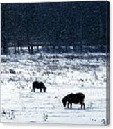 Ponies In The Snow Canvas Print