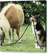 Pony With Lead Rope Held By Sitting Dog Canvas Print