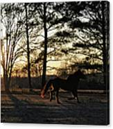Pony's Evening Pasture Trot Canvas Print