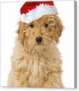 Poodle In Christmas Hat Canvas Print