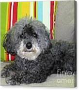 Poodle Love Canvas Print