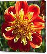Pooh Dahlia Flower Canvas Print