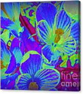 Pop Art Blue Crocuses Canvas Print
