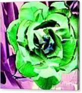 Pop Petals Canvas Print