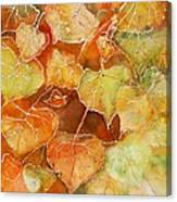 Poplar Leaves Canvas Print