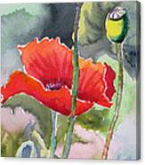 Poppies 3 Canvas Print