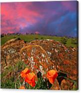 Poppies And Clouds Canvas Print