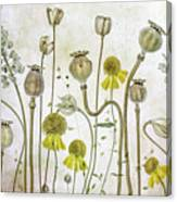Poppies And Helenium Canvas Print
