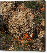 Poppies And  Rocks Canvas Print