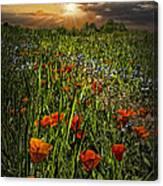 Poppies Art Canvas Print